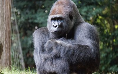 The 800 Pound Gorilla in the Room: Your Management Team Should be Responsible for Safety not the Safety Department